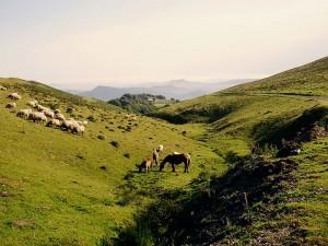 Pyreneeën met Potok, de wilde paarden